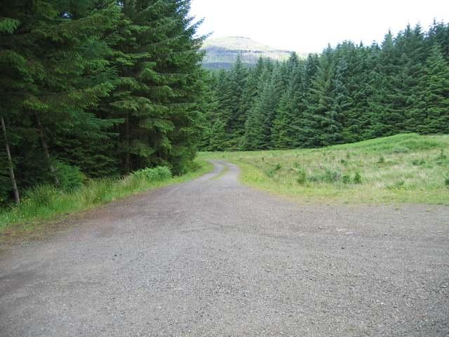 Forest road in Gleann Seilisdeir