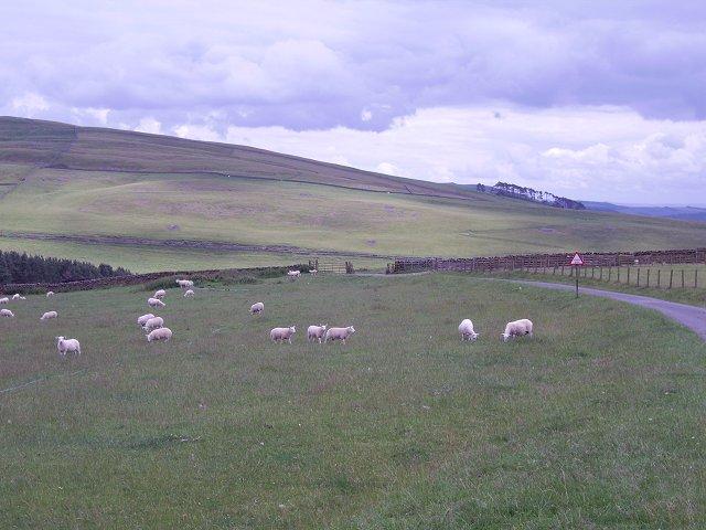 Cattlegrid, Blackhaugh