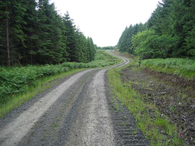 Forest road in Choille Fionnairdh