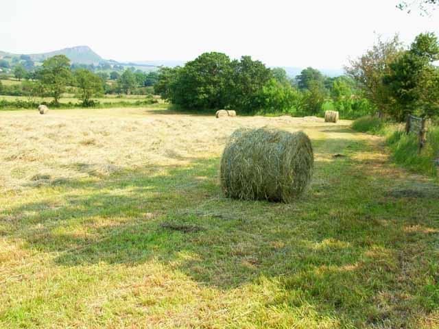 Hay bales near Meerbrook