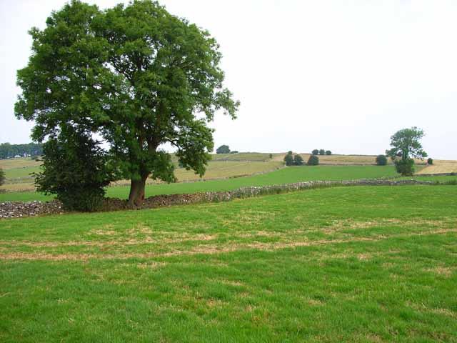 Fields near Alstonefield
