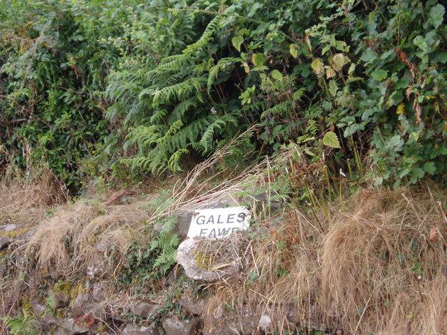 Gales Fawr