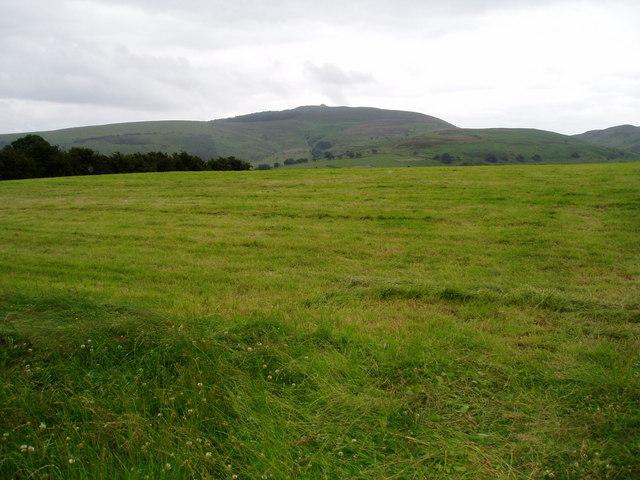 Mountain grassland near Cilcain