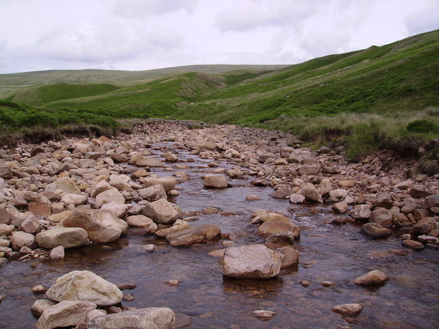 Worm Gill