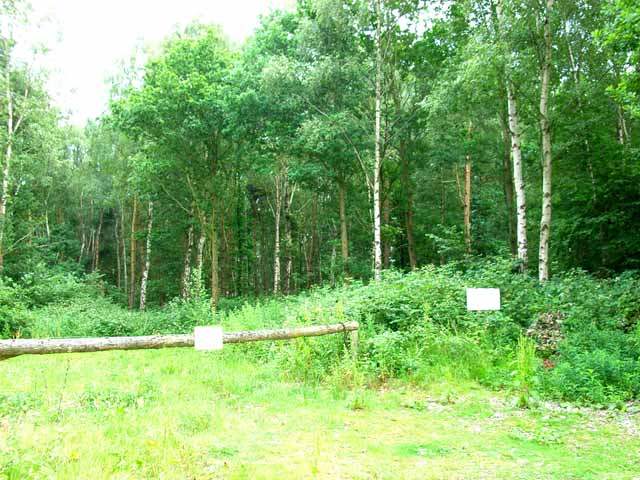 Woodland at Roost Hill