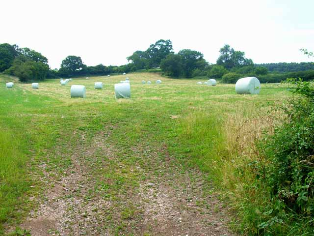 Hay meadow and hay bales