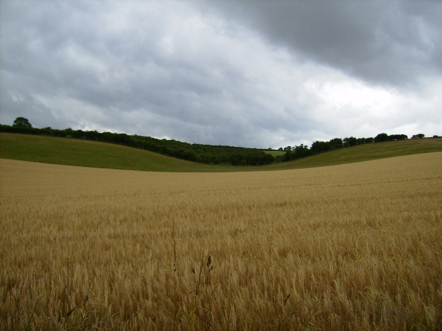 Langton Wold seen from the gallops track