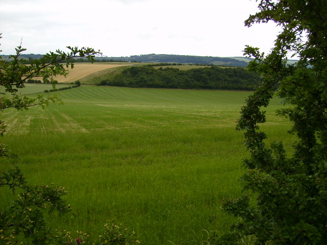 View of Brough Hill Plantation from the B1248 road