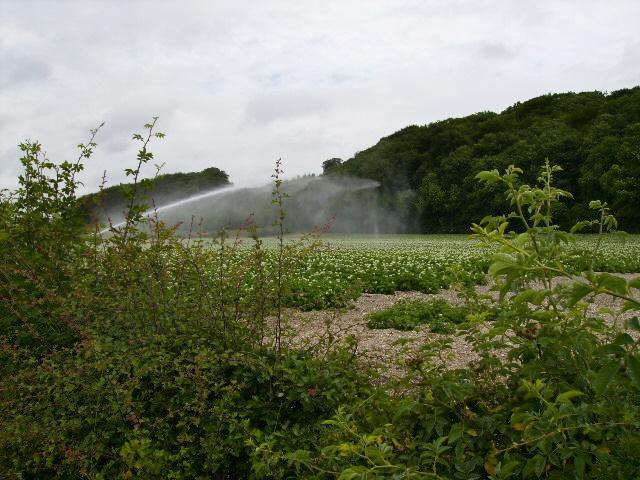 Automated watering of potato field near Wetwang