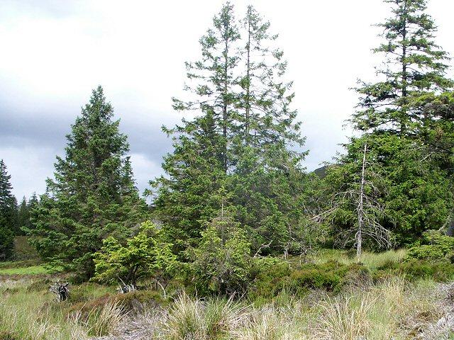 Woodland fringe