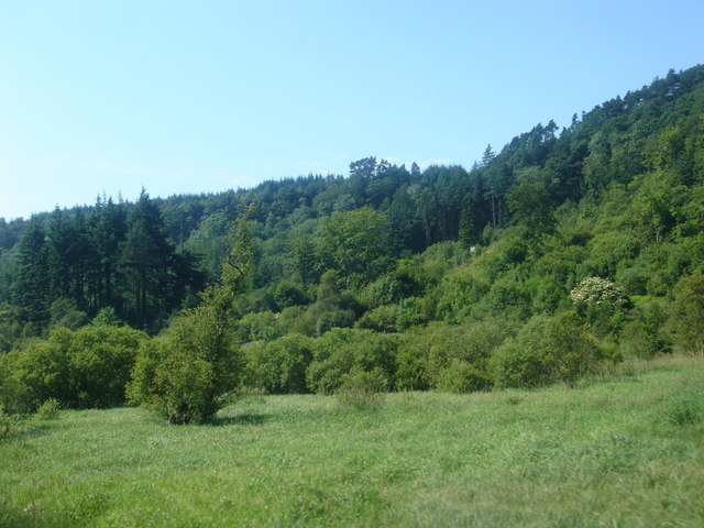 Woods near Newtondale Halt