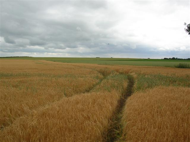 Farmland - Little Hutton