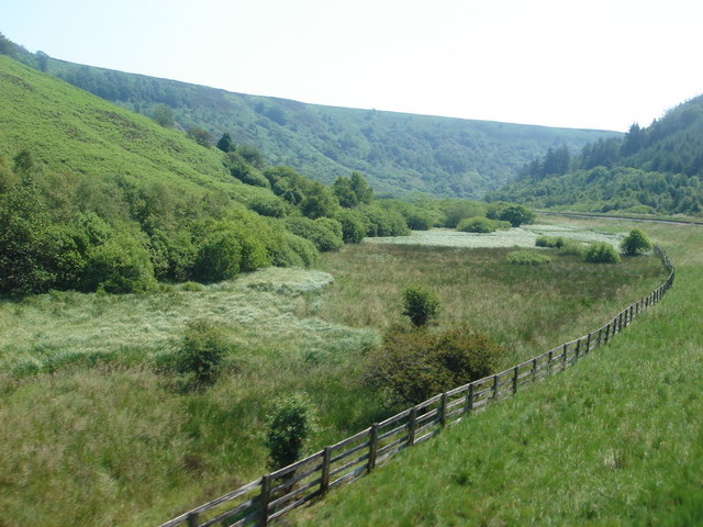 Trackside scenery on the North Yorkshire Moors Railway