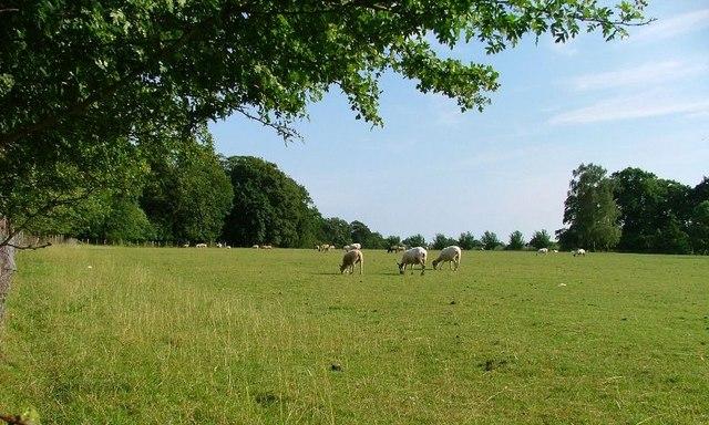 Grounds of Kirkleavington Hall