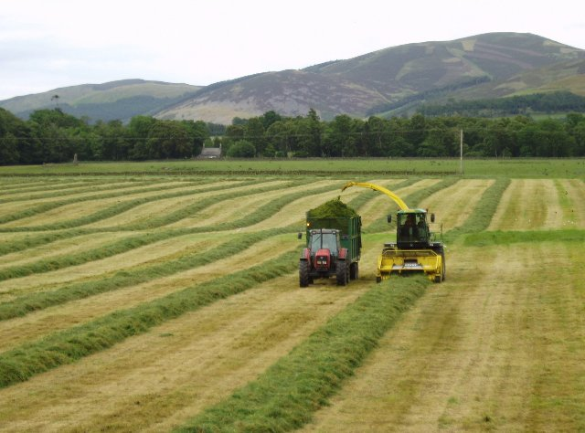 Cutting silage, Manor Valley