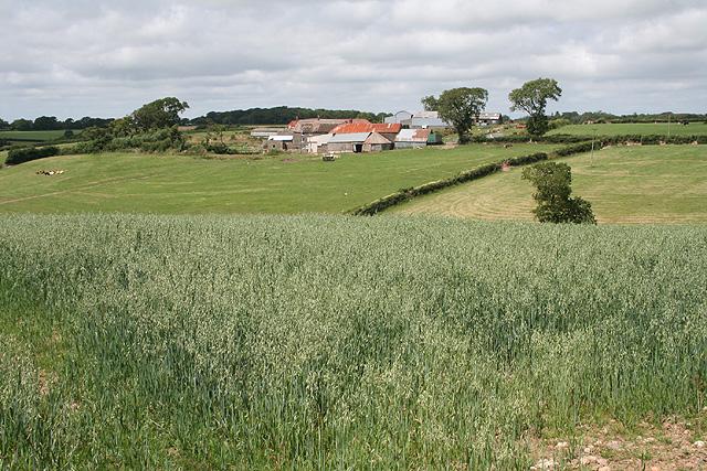 Drewsteignton: towards Thornbury