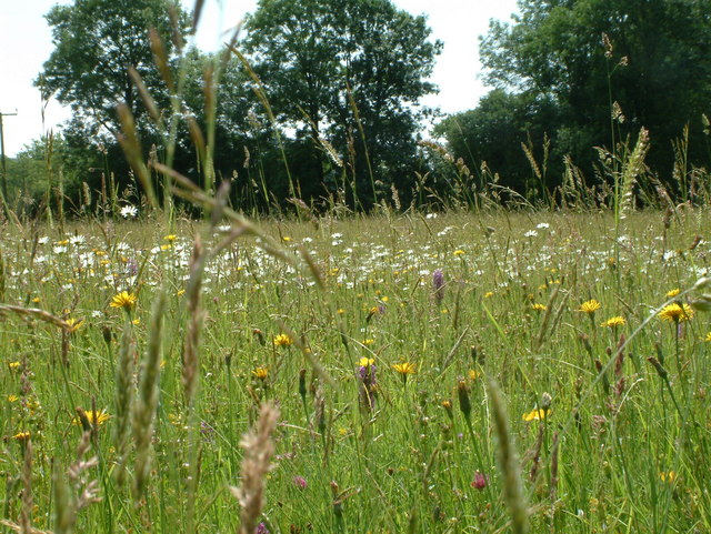Winllan Wildlife Garden - Hay Meadow with wild flowers