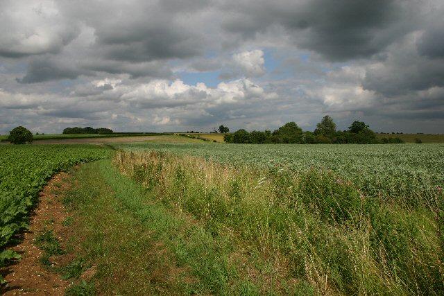 Footpath to Cockfield