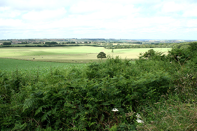 South Tawton: Cocktree Moor