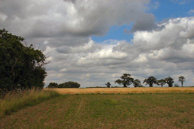 Fields at Shrub Farm