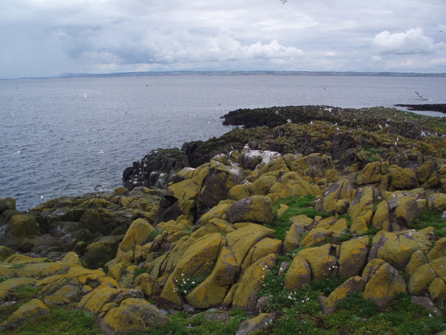 Sea birds and rocks, Isle of May