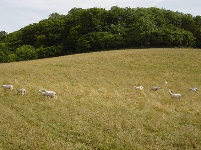Oakmoor Hill, Bentworth