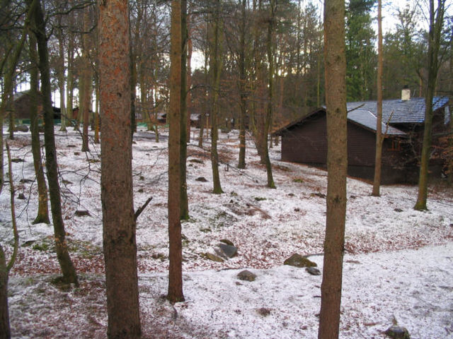 Woodland at Center Parcs