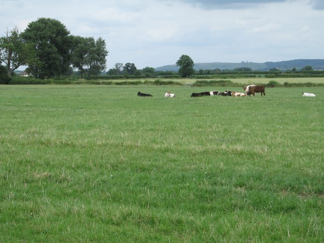Pasture at Stokes Marsh Farm