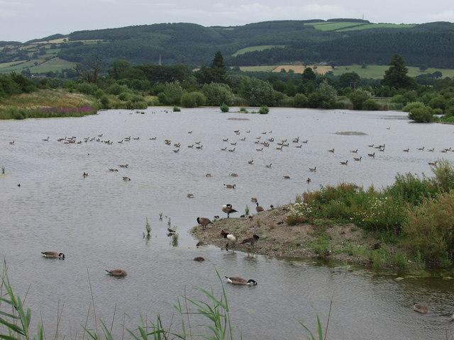 Llyn Coed-y-Dinas Nature Reserve