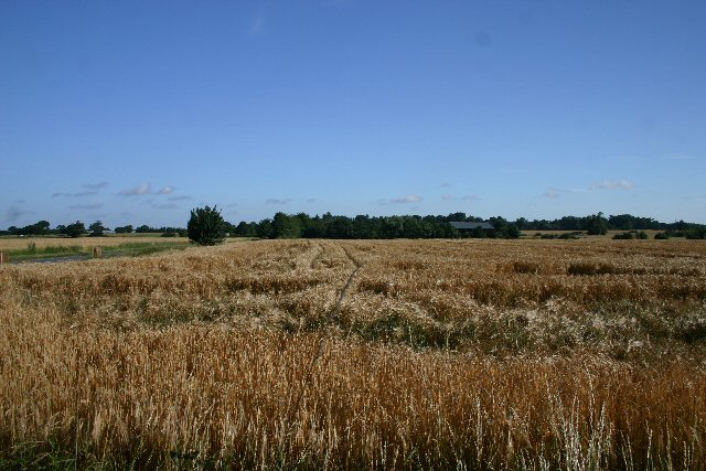 Wheat field at Bradfield Combust