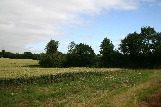 Field at Cocks Green Farm