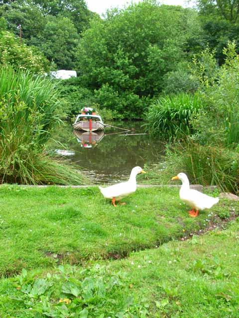 Village duck pond at Moddershall