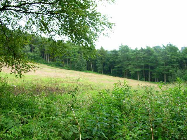 Meadow and woodland near Moddershall