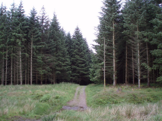 Forest  track below the Menteith Hills