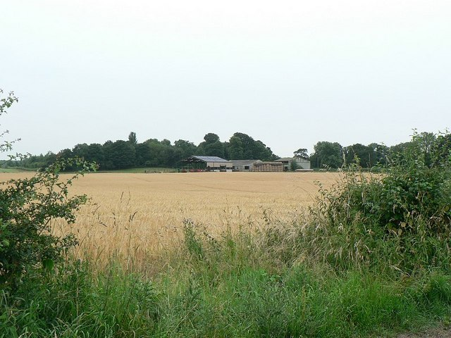 Barley field at Thorpe Farm, Ripon