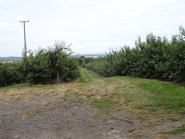 Orchards, Foxpitt Farm