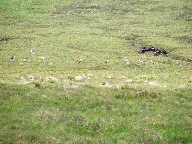 Empty hillside?