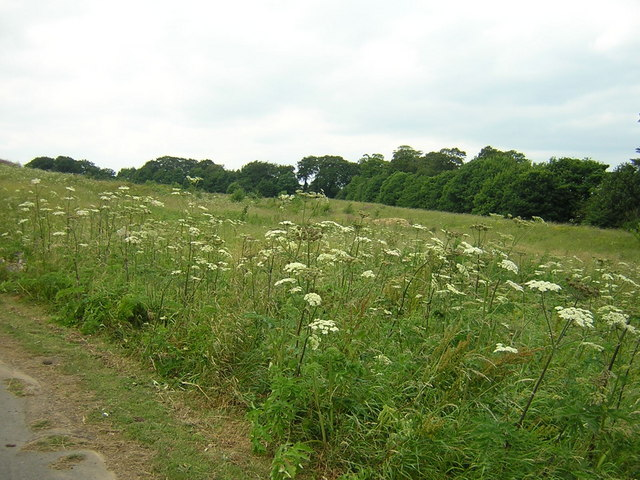 Waste land near Silksworth Lane