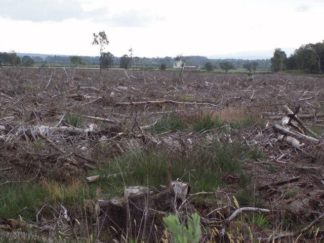 Clear felling on Flanders Moss