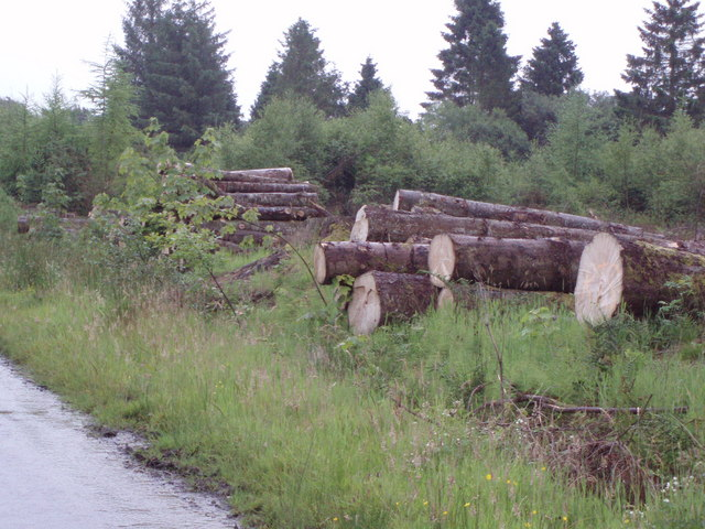 Logs on a minor road