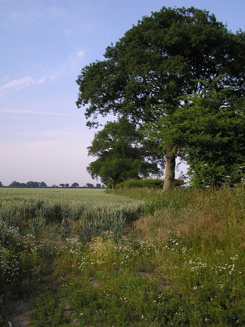 Field edge, Hickling
