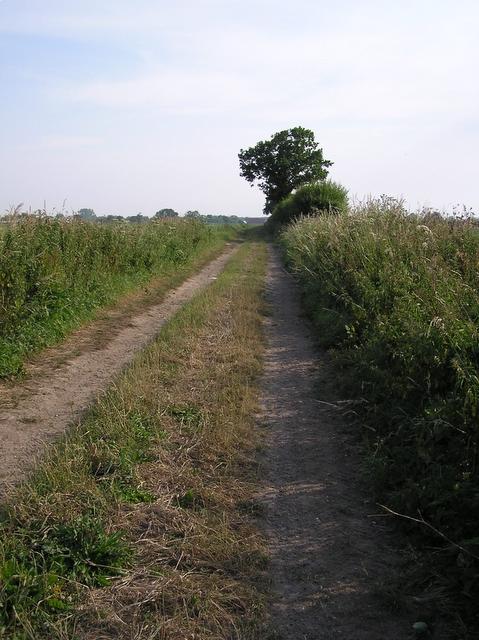 Track, near Hickling