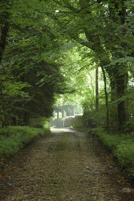 Driveway leading to Hazel Holt.