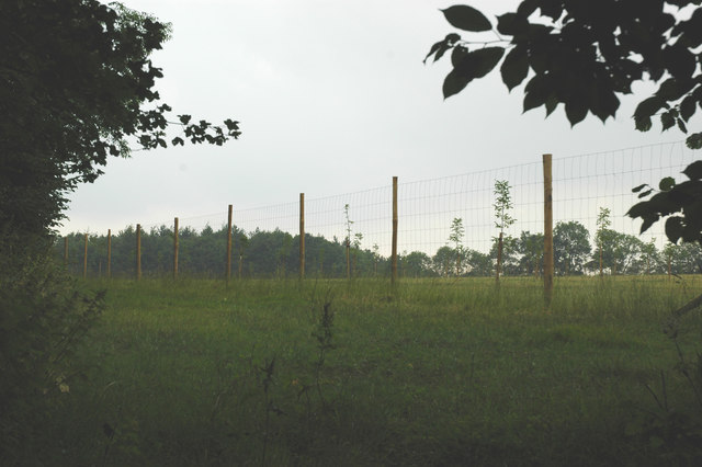 Fenced land.