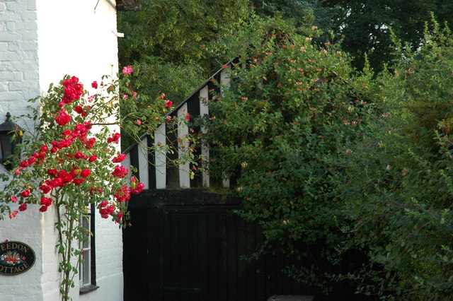 Honeysuckle covered garage and roses on the cottage.
