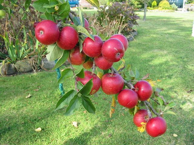 It was a good apple crop in 2003