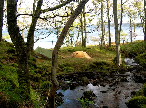 Ancient woodland on the south western shore of Loch Linhe