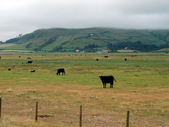 Pasture by the beach near Tywyn