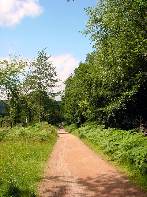 Cycle Trail, Forest of Dean, Long Straight Descent
