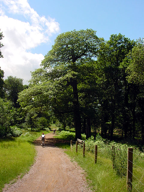 Cycle Trail, Forest of Dean